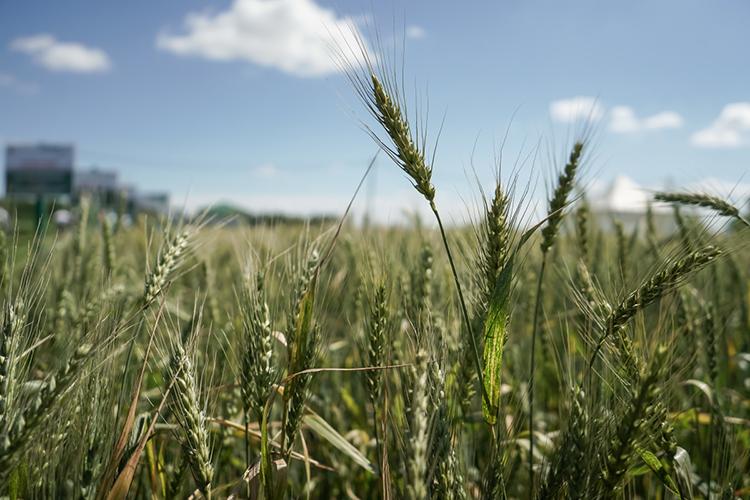 Всего напосевную кампанию 2021 года было затрачено около 28млрд рублей, или свыше 9тыс. рублей нагектар посева