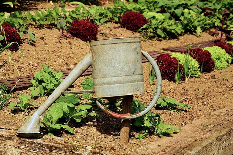 Потребление водыувеличиваетсяза счетдачников, втом числе нахозяйственные нужды и полив огорода