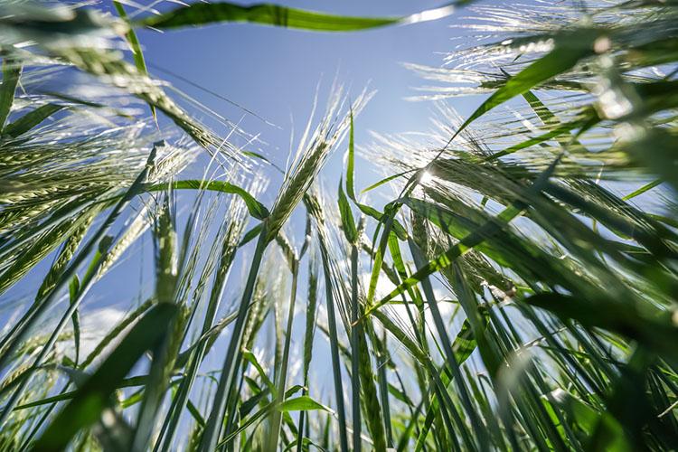 «Если засуха продержится еще три недели, тобудет сценарий 2010года»