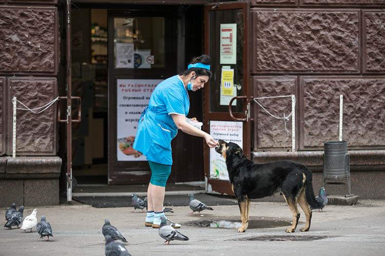 В Казани планируют создать бесплатные мобильные пункты вакцинации и стерилизации собак