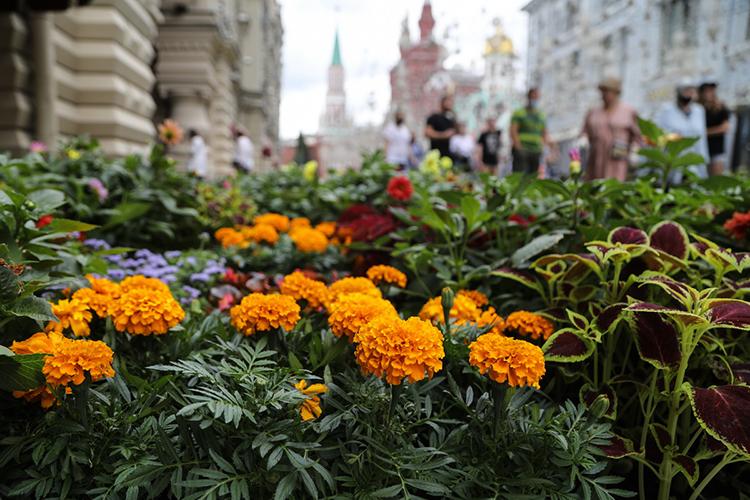 Завершает композицию французский сад, скованный изстали Дмитрием Жуковым. Вобъекте этого художника изКарелии соединяется продуманная логика иприродный хаос разросшихся веток