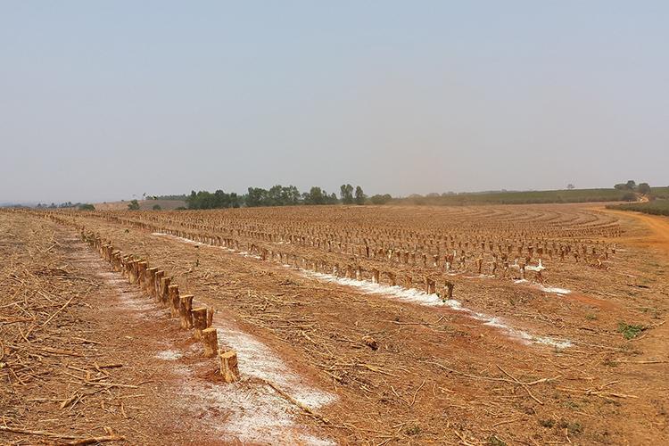 Давление нацены оказывает сильнейшая засуха втрех регионах Бразилии, крупнейших поставщиках кофе.Бедствие накрылоштаты Парана, Сан-Паулу иМинас-Жерайс. Зазасухой последовали заморозки, что усугубило ситуацию