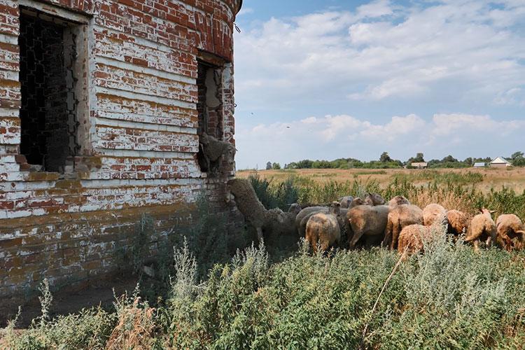 Водном изокон выломали решетки— через этот «выход» спешно эвакуировались напуганные корреспондентом «БИЗНЕС Online» овцы