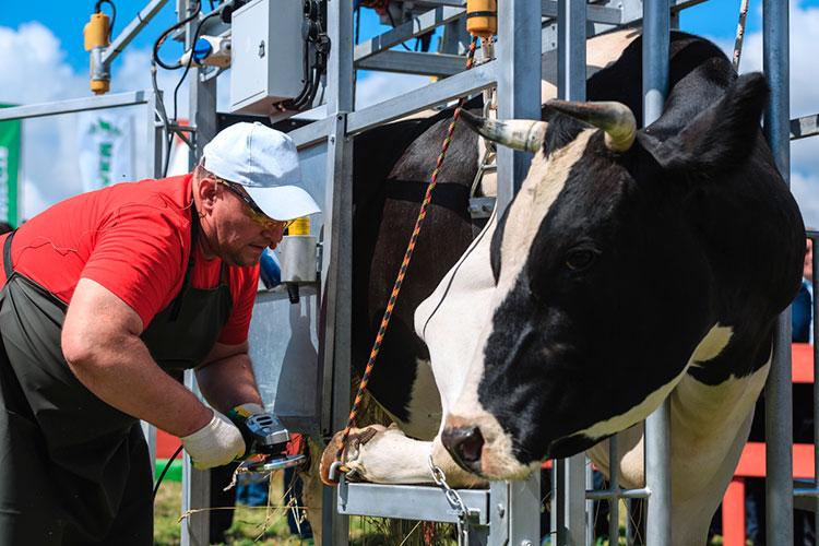 «Вэтом году вреспублике ввели вэксплуатацию 14 молочных комплексов на6,5 тысяч дойных коров. Это дает нам дополнительно 40 тысяч тонн молока вгод»