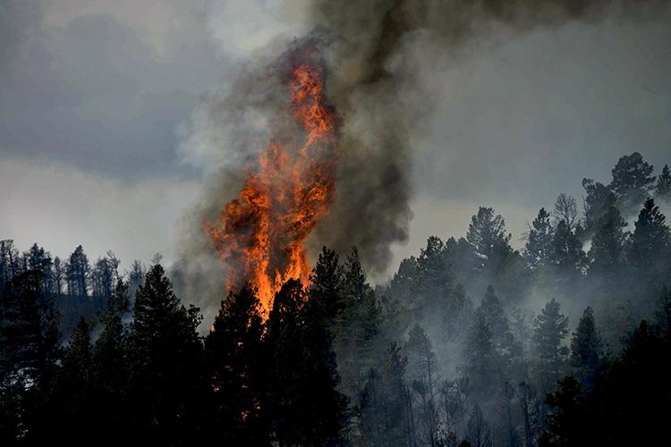В соседних районах сТатарстаном продолжают гореть заповедные леса. Так, вМордовии огонь прошел уже более 5,8тыс га, крупный новый очаг возгорания накануне потушили ивБашкортостане