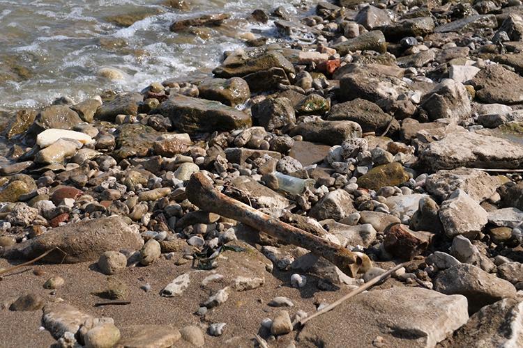 На берегу до сих пор без труда можно найти кости