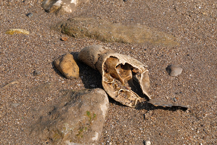 Местные власти обещают обнаруженные останки перезахоронить напоселковом кладбище, где специально подберут место ипоставят табличку