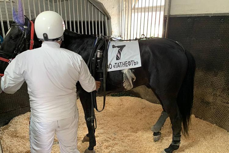 Сегодня вконно-спортивной школе«Татнефти»содержится более 70 лошадей американской, орловской, русской рысистой пород ичистокровных верховых пород