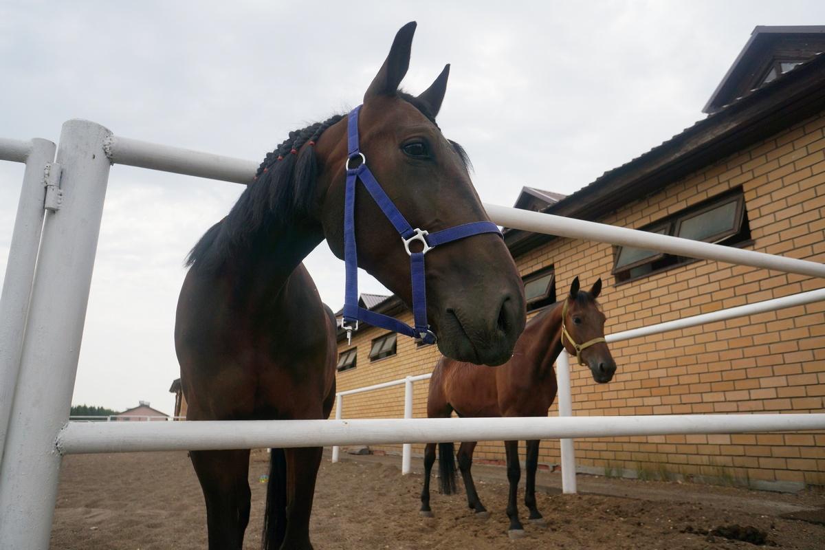Содержание одной головы наказанском ипподроме обойдется коневладельцам примерно в30тыс. рублей вмесяц.