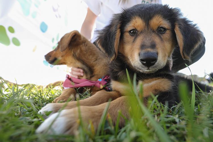 Пословам Нуруллина, новый дом искали как собаки, которые пробыли в«Зооцентре» уже больше года, так ите, кто вприюте совсем недавно: одни были брошены хозяевами, другие— рождены наулице