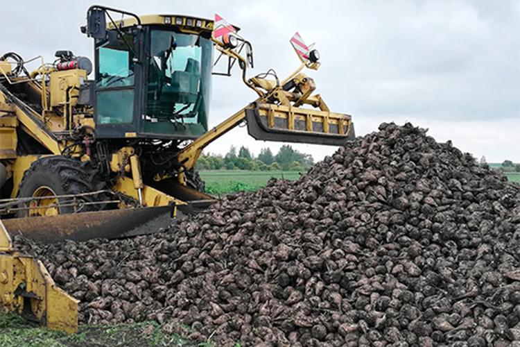 Назерновых работа наполях незаканчивается— предстоит уборка кукурузы, рапса, подсолнечника, сахарной свеклы, понекоторым изэтих культур работа уже начата