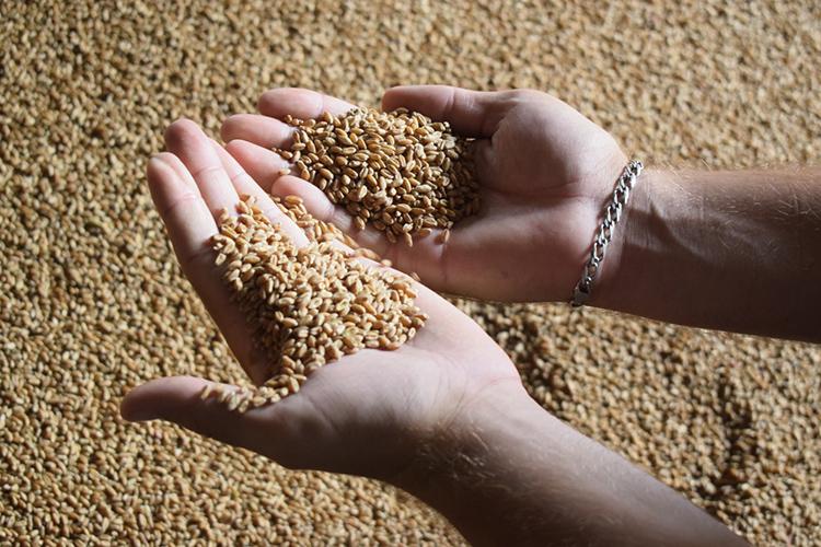 Изкрупных агрохолдингов наибольший намолот показало АО«Агросила»— 211,4тыс. тсурожайностью 18,2 ц/га