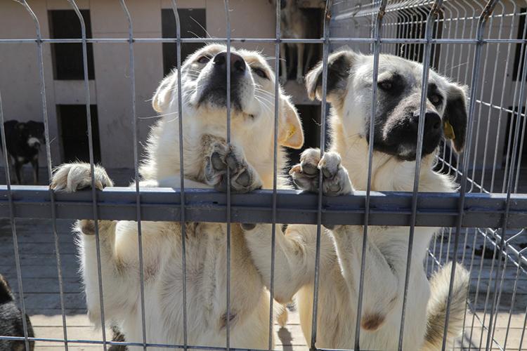 Мэр напомнил овстречесзоозащитниками, накоторой решили провести перепись бездомных собак, азатем имассовую стерилизацию