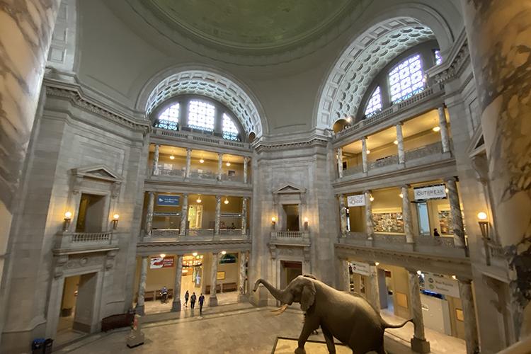 ВВашингтонемножество великолепных музеев ихудожественных галерей. Большинство изних абсолютно бесплатны