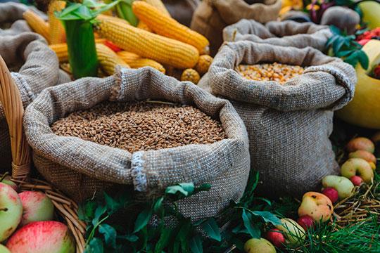 Радуют министра и цены на зерно, которые выросли в два раза по сравнению с прошлым годом с 4,5–5 рублей за килограмм до 9–10 рублей
