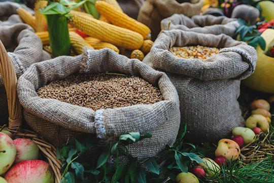 «За минувшие двадцать лет Россия стала крупнейшим экспортером зерна в мире»