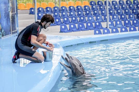 ВРоссии есть лишь один подобный центр, вЛазаревском Краснодарского края, ноонимеет коммерческое направление, апроект челнинского дельфинария носил больше социальный характер