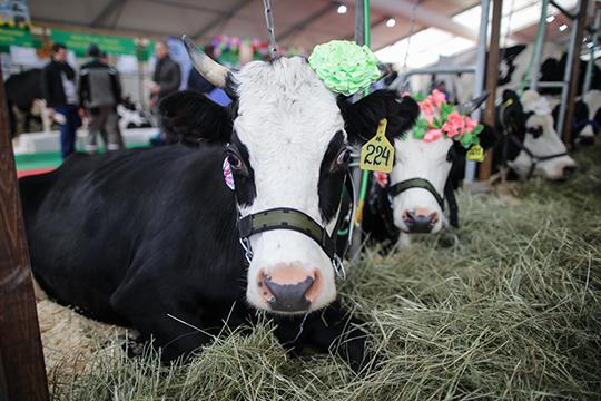Корреспонденты «БИЗНЕС Online»отправились впавильон животноводства, где коровы, быки, лошади иовцы соседствовали сцыплятами ипушным зверями