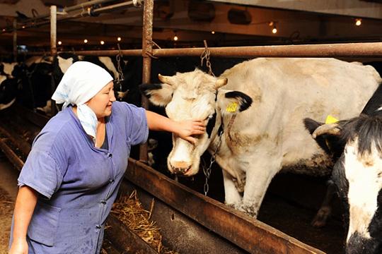 Сейчас минсельхоз субсидирует начинающим фермерам строительство мини-фермы для крупного рогатого скота