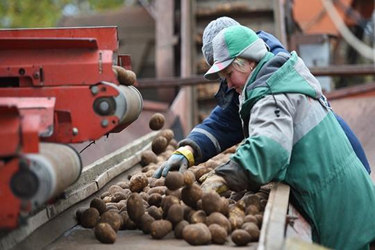 Мамаев также считает, что частные хозяйства несмогут быть достаточно эффективными.«Мини-фермы будут развиваться доопределенного порога»