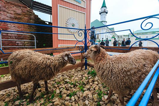 Стоимость мелкого рогатого скота начиналась с8 тысяч рублей, были животные покрупнее, соответственно ицена наних дороже