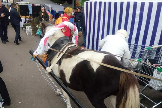 Замминистра Потехину тем временем удивляли пони, запряженной вповозку