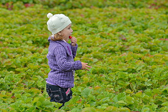 Общая площадьплодовых насаждений и ягодных культурв целом сократилась за десятилетие с 8,2 тыс. га до 7,85 тыс. га