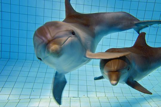 «Дайвинг сдельфинами— это просто космос! Они очень чувствительные, умные, чуткие.Недаром есть такое понятие как дельфинотерапия, они реально лечат»