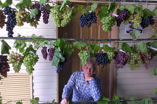 Леонтий Кирягин: «Большинство людей на самом деле не знают, а только предполагают, что виноград технологически сложная и трудозатратная культура и им с ней не справиться»