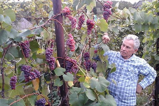 «К почвам виноград не требователен — растет почти на любых (кроме солончаковых и заболоченных). А вот к теплу и свету предъявляет повышенные требования»