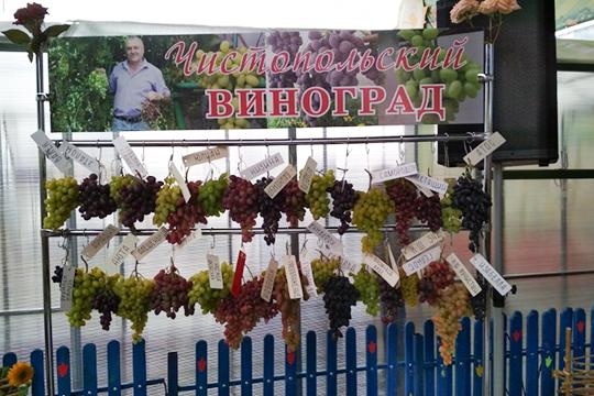 «Вот клуб «Казанская лоза» и чистопольский клуб объединяют несколько десятков виноградарей, а в республике-то их тысячи. Каждый варится в собственном соку и не знает, что происходит за пределами его участка»