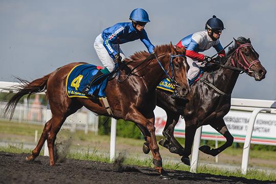 «Мы планируем испытания татарской породы лошадей, но исторически на них воевали»