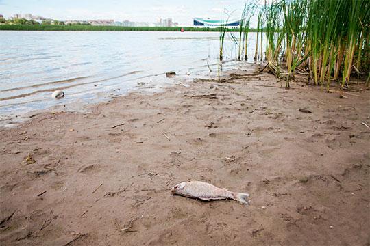 Проблема мелководий – только одна сторона медали. Вторая сторона – оценка качества воды и анализ процессов на реке. Наверняка, казанцы не забыли случая массового мора рыбы и птиц на реке два года назад