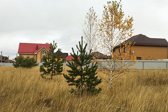 Почти любое дерево, пусть даже и «неценной» породы, можно с успехом вписать в будущий план озеленения