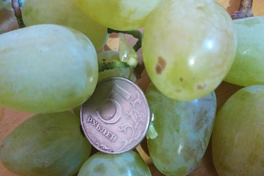 «Вопреки стереотипам, что он у нас может расти только мелкий и кислый виноград, урожай получился крупный и сладкий. Всем, кого угощал, очень понравилось»