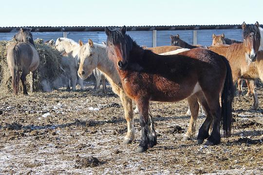 «Мывзяли под свое крыло обанкротившийся колхоз», где разводили лошадей, ипродолжили это дело»