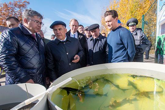 Рустам Минниханов: «В употреблении рыбы мы молодцы, но по разведению – слабоваты»