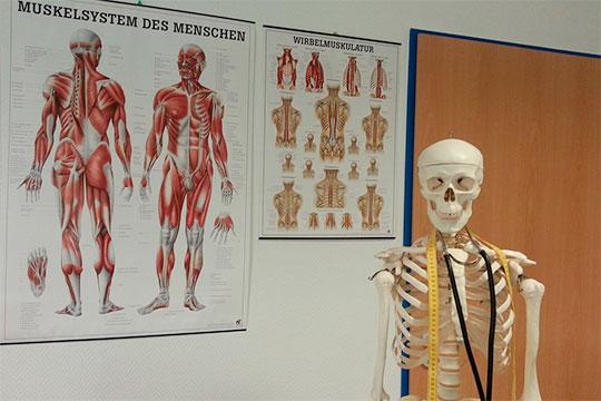 «Внашем теле насчитывается около 600 скелетных мышц, ихудельный вес может достигать 40% отобщей массы тела»