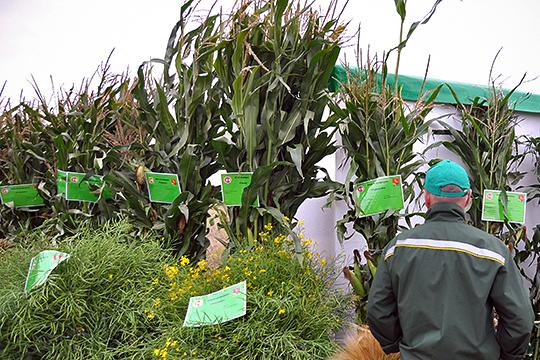В Татарстане уже не первый год ведется политика по наращиванию производства высокодоходных культур — таких, как рапс, подсолнечник, кукуруза. Злочевский считает, что подобная политика оправданна