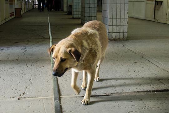 «Пусть нижнекамцы ездят вЧелны кветеринару или вКазань. Здесь мынебросим бездомное животное ибудем допоследнего пытаться спасти ее, собирая поСМС 50-400 рублей»