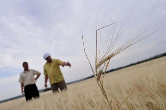 «Мывсе как дурачки пошли…»: как фермы платят за«схематоз» сагрострахованием