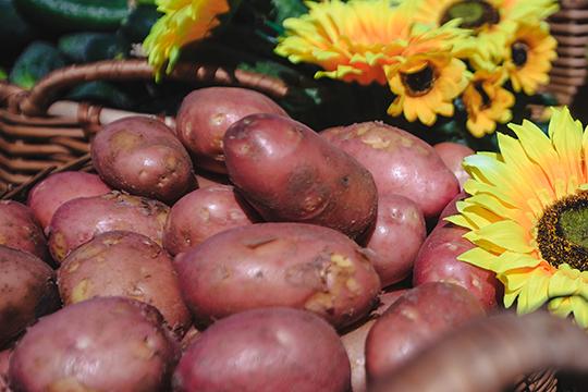 Для тогочтобы картофельные глазки хорошо прорезались, нужно провести процесс яровизации