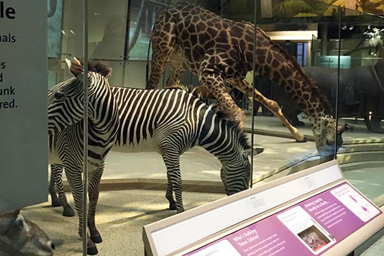 «Музей Естественной истории поразил меня особенно, словами это не описать»
