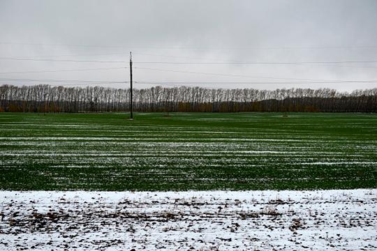 Если снега нет, а температура опустится ближе к 30 градусам мороза, то у нас появляется большой риск потерять озимые. Если снега вообще не будет до весны, то это значит, что и влаги не будет на полях, а это значит, что урожая не будет — не только озимых, но и яровых