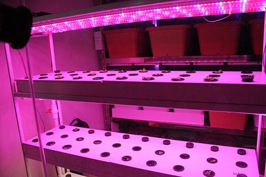 Лаборатория. Завод растений Фошанского университета