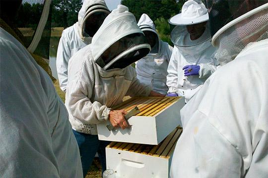 Всего за несколько недель погибло около 3 тыс. пчелиных семей, утверждает Динмухаметов