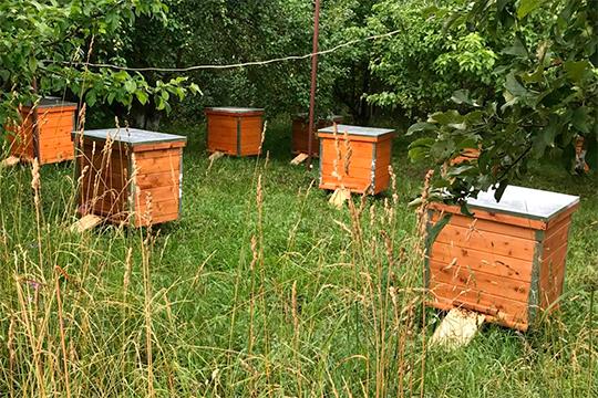 Для решения проблемы массовой гибели пчел, по мнению Мунькова, необходимо элементарное соблюдение уже существующих норм и правил