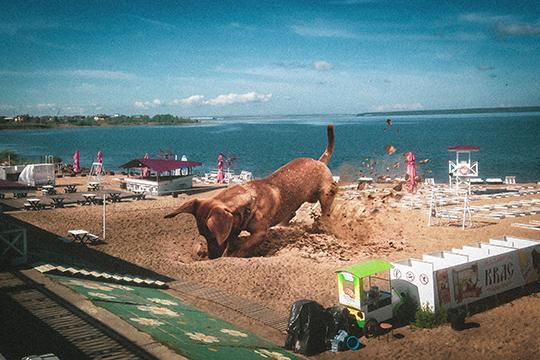 «У меня есть картинка, где я наложил изображение собаки, которая роет песок на фотографию городского пляжа SunDale Айрата Тагирова. А люди начали мне писать, как я завуалированно изобразил то, что под Тагирова копают»