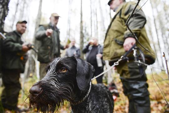 «Если ты пошел на охоту на медведя, и с тобой хорошо обученная собака, ты уже на 99% уверен, что он тебя не сожрет»
