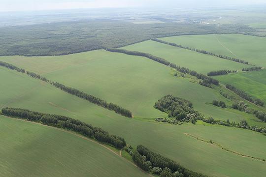 «Нужен четкий севооборот, когда мы на 50% площадей выращиваем зерновые, а на остальных 50% — рапс (25%), бобовые, которые насыщают землю азотом и меняют структуру почвы»